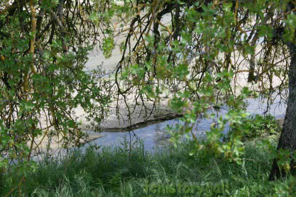 Spring Creek#1