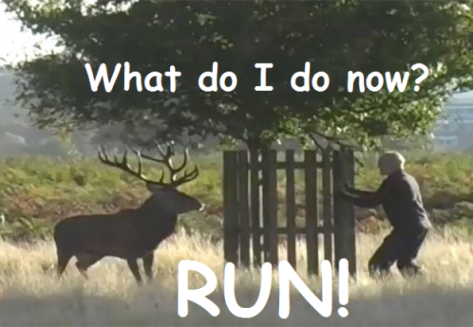 run-from-stag