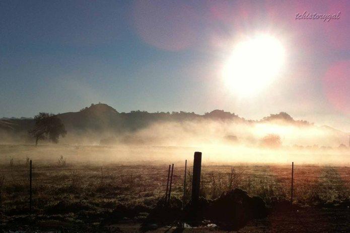 TC January 2012 Fog
