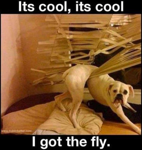 Dog spam