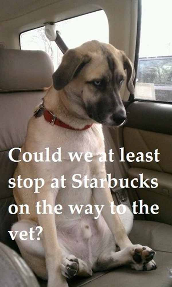 Dog Starbucks