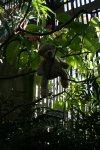 Manny in bush