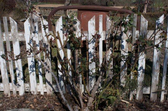 TC Gardening Chores 4