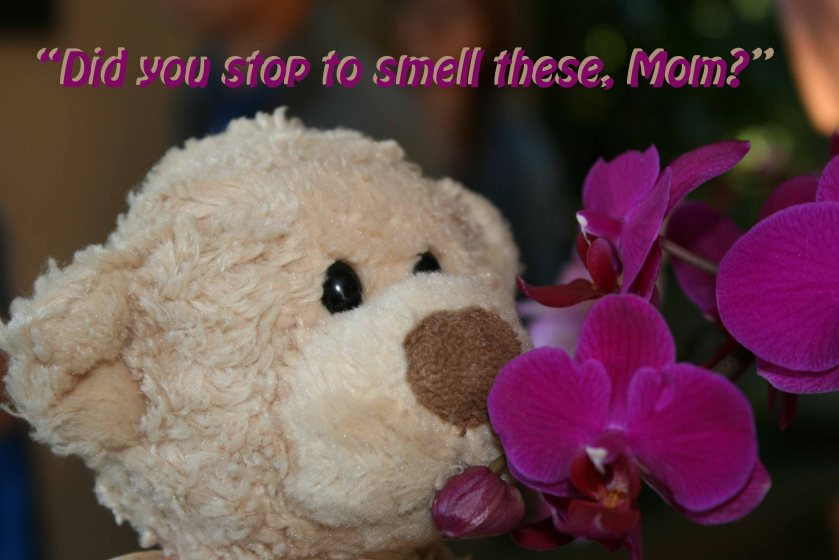 Ongoing need to smell the flowers