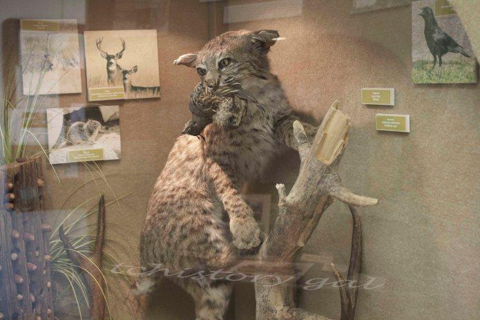 Welcome to the Natural History Museum at Kaweah Lake  Kaw, kaw, snap.