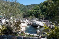 Near the mouth of the Kaweah River, a #5 Rafting River, and very noisy - Kaw Kaw!