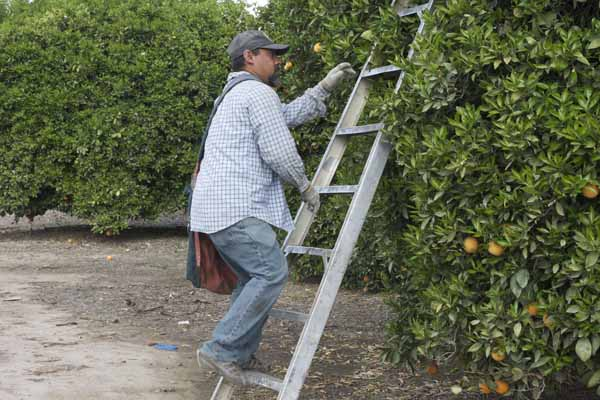 He uses his hands on the ladder for the first few steps.