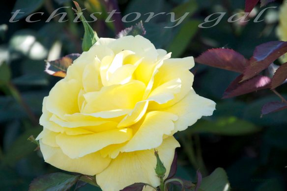 To have a yellow brick road, one must start with a brick yellow rose.