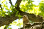 squirrel in tree, nose up