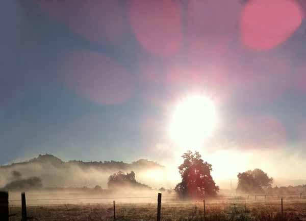 fog1a