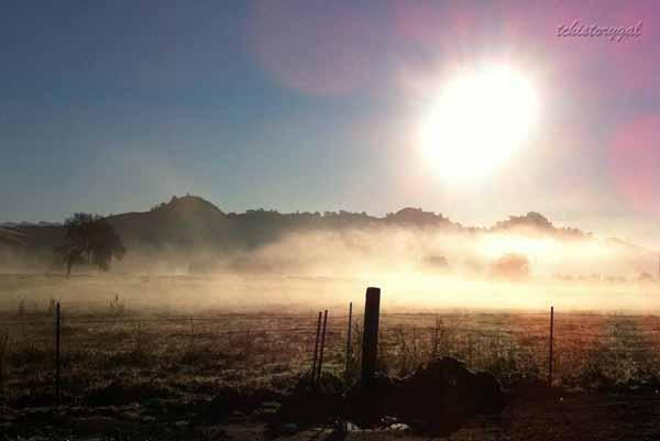 Foggy January