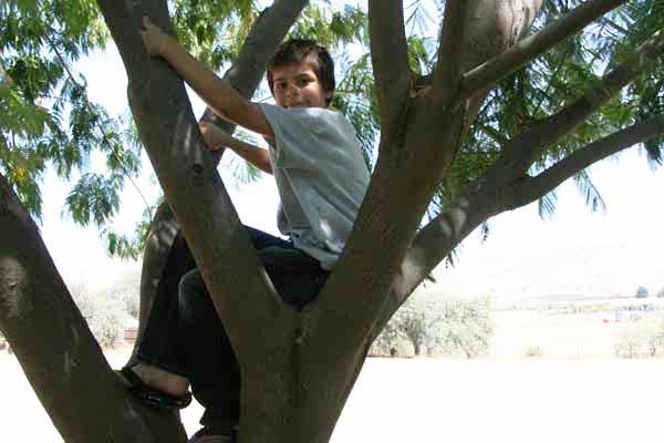 Edward in a tree
