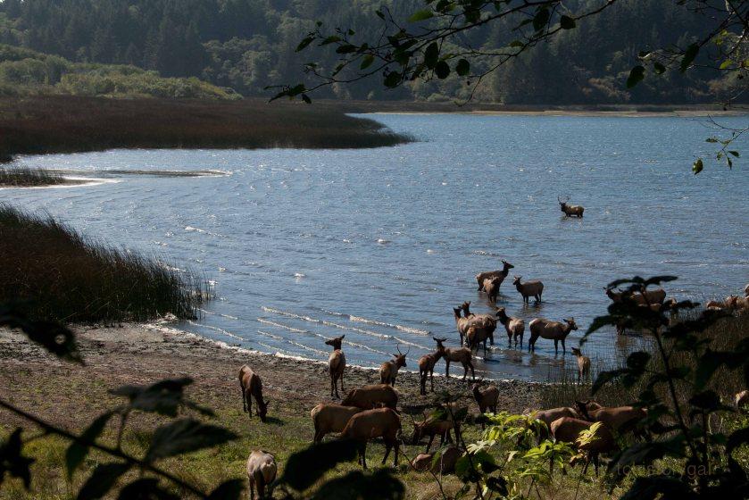 SFW Herds of Elk108