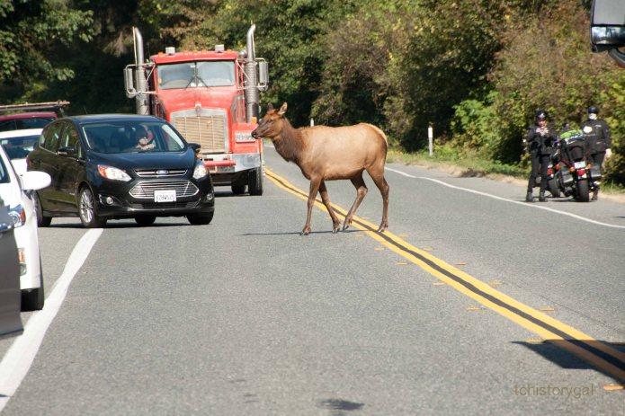 SFW Herds of Elk124