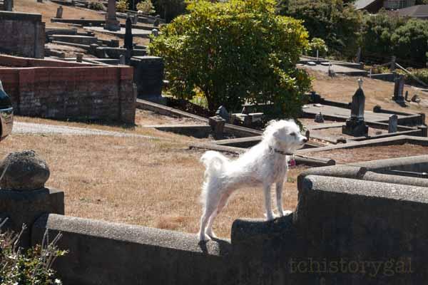 SFW TAV Ferndale Cemetery PG
