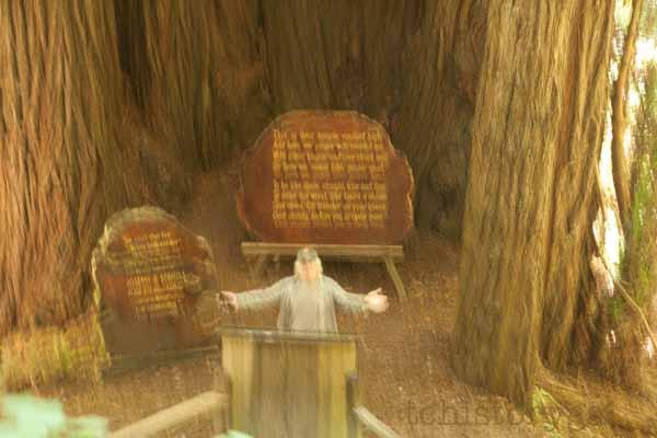 SFW TAV Trees of Mystery VR