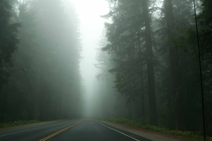 Saturated air in the California Redwoods