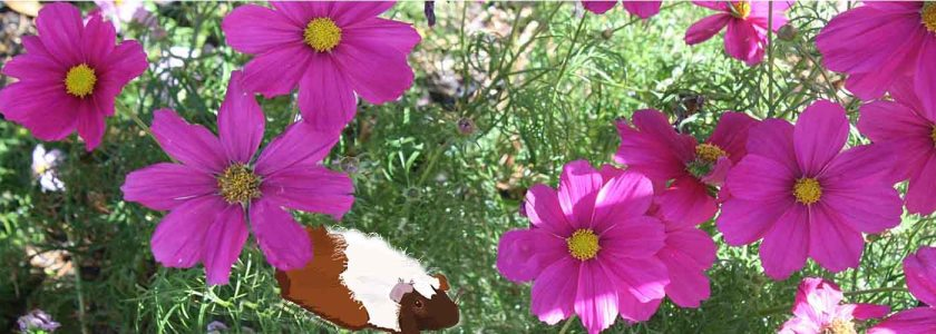 header flower & piggles