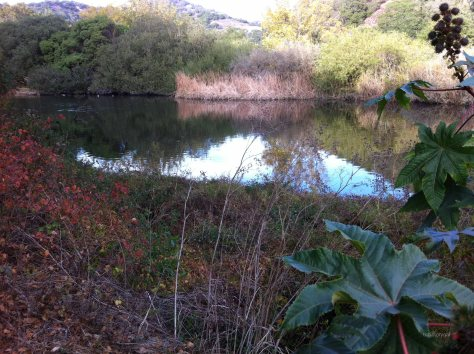 Farther upstream on San Luis Creek