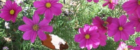 header flower & piggles