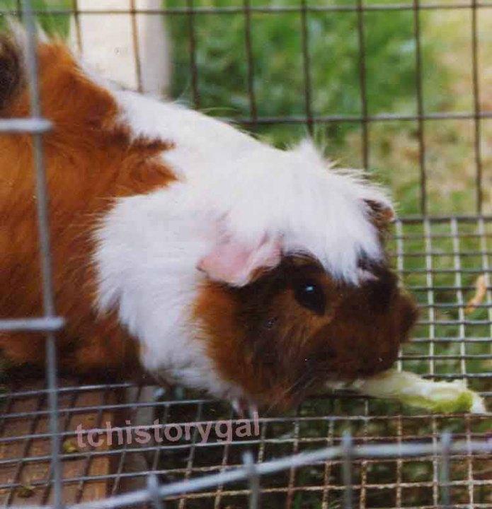 Piggles eating copy 1t