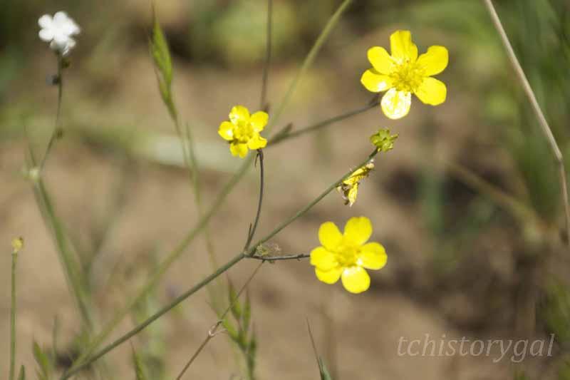 SFW Wildflower class20130420_74r
