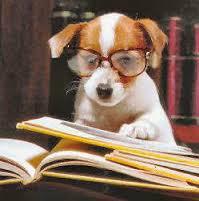 learning, writing, blogging, reading, pets, dog