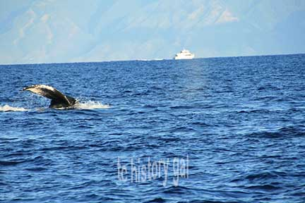 whalewatching 10