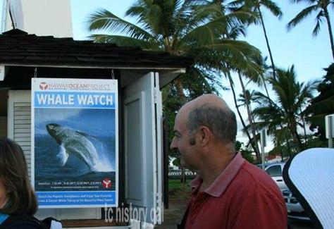 whalewatching 5