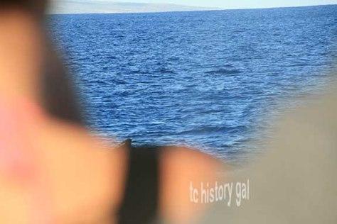 whalewatching 9