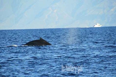 Whalewatching2