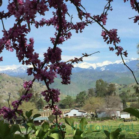 Spring at Running PRanch