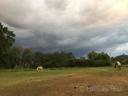 Stormy Sunset in Elderwood105