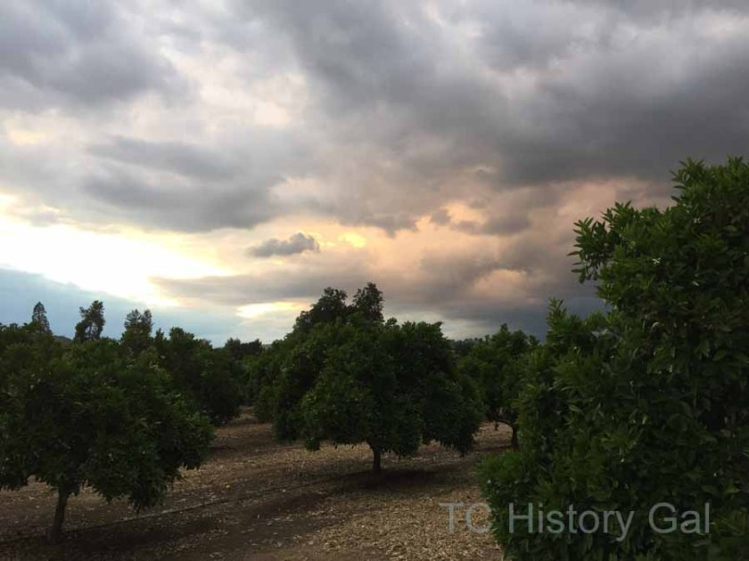 The Woodlake Valley grows thousands of acres of oranges as well as other fruits and nuts.