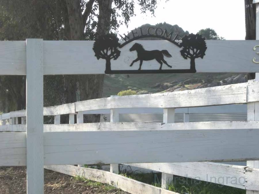fancy horse fence