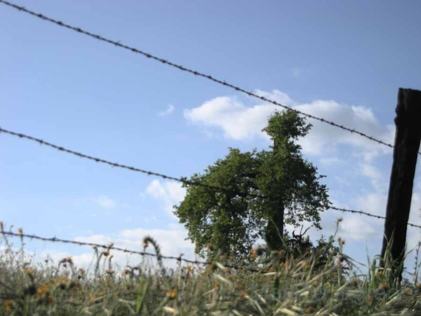 prickly fence