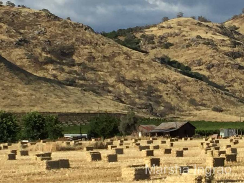 Central CA agriculture hay101