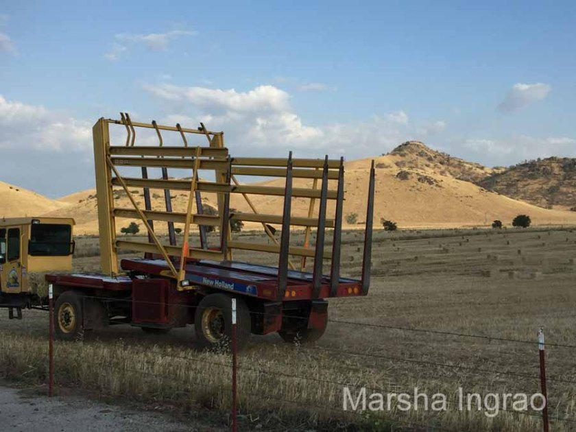Central CA agriculture hay109