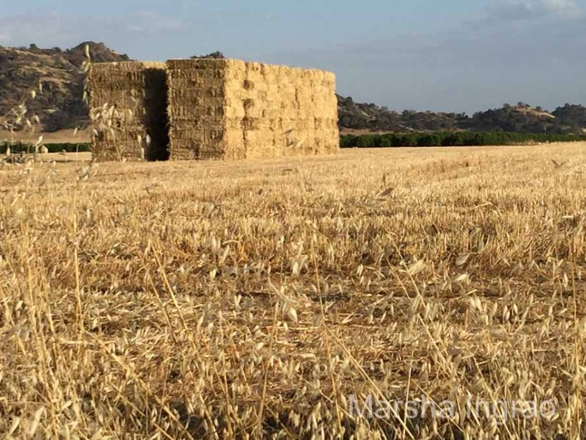 High class hay