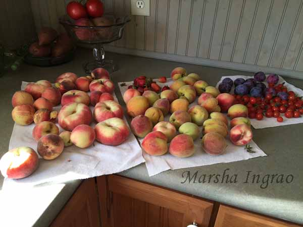 Donut peaches, and other stuff
