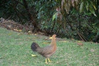 2016 July 19 OWC Chicken112