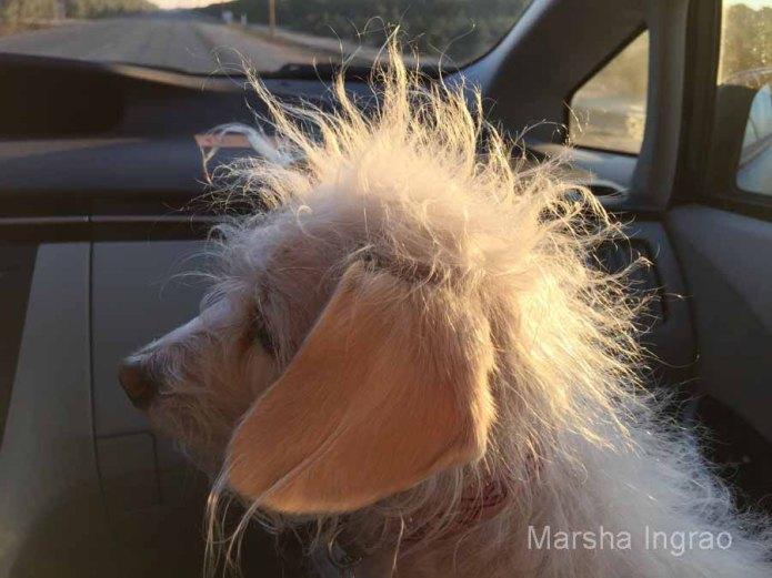 Puppy Girl's normal look.