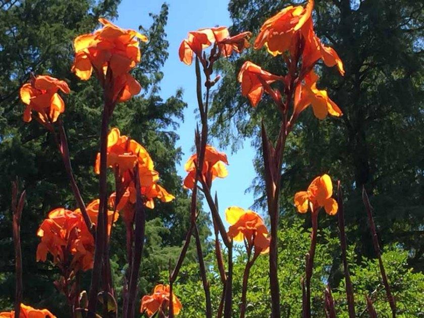 longwood-gardens106