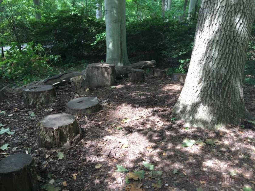 Travel: walking paths A clump of stumps next to the fairy ring