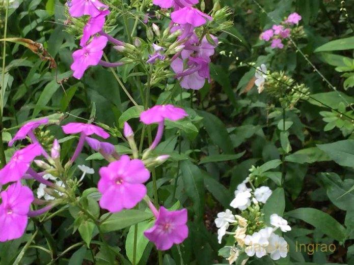 winterthur-gardens133