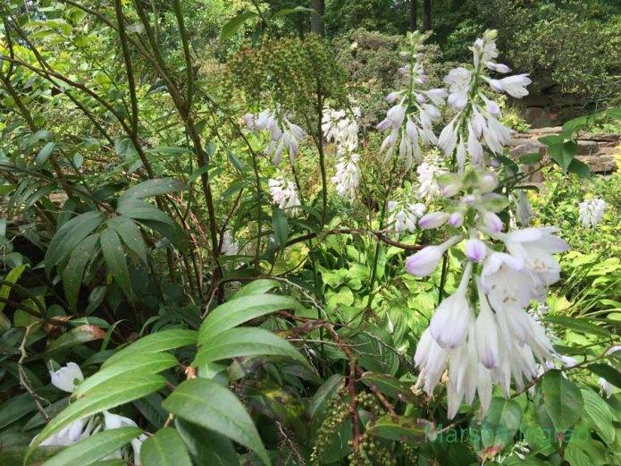 winterthur-gardens154