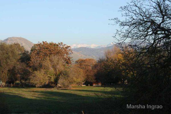 Elderwood, CA in December