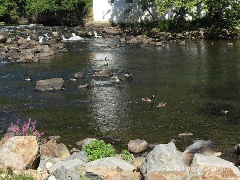 brandywine-river_brecks-mill102