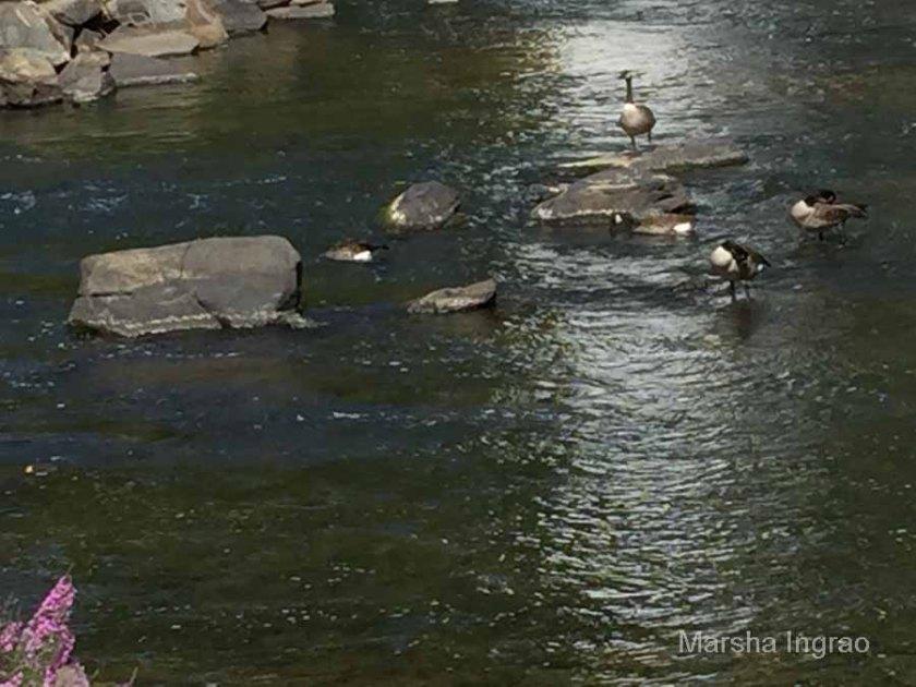 brandywine-river_brecks-mill104