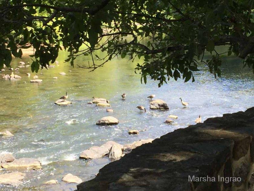 brandywine-river_brecks-mill111